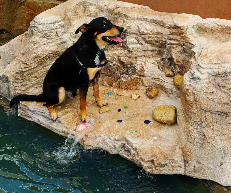 Even dogs love our waterfalls
